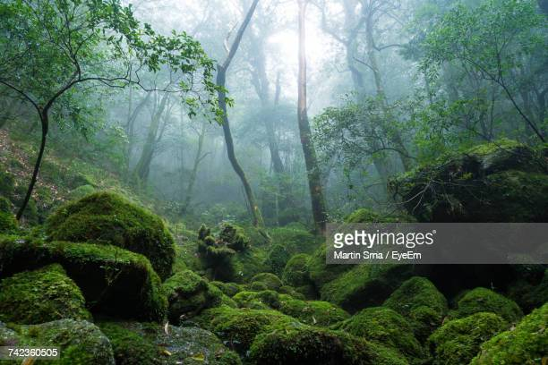 trees in forest - moss stock pictures, royalty-free photos & images