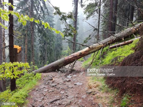 trees in forest - fallen tree stock pictures, royalty-free photos & images