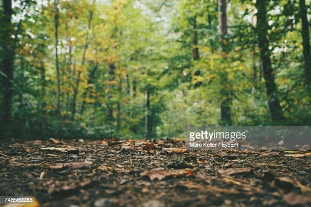 trees in forest - differential focus stock pictures, royalty-free photos & images