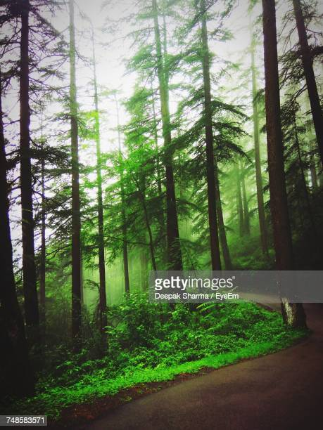 trees in forest - shimla stock pictures, royalty-free photos & images