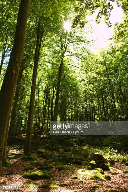 trees in forest - haack stock pictures, royalty-free photos & images