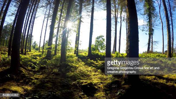 trees in forest - gregoria gregoriou crowe fine art and creative photography. imagens e fotografias de stock