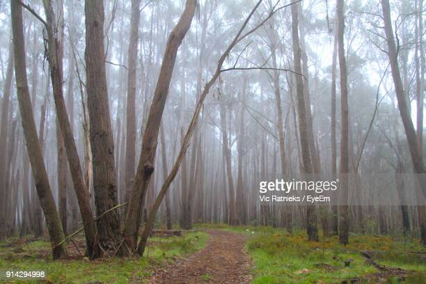 trees in forest - ratnieks stock pictures, royalty-free photos & images