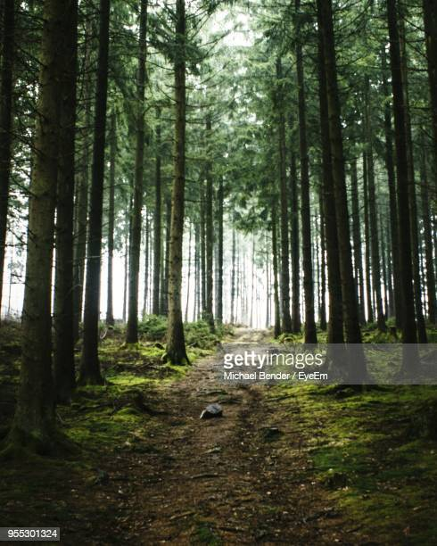 trees in forest - central europe stock photos and pictures