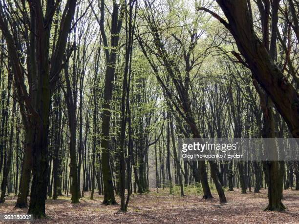 trees in forest - oleg prokopenko stock pictures, royalty-free photos & images