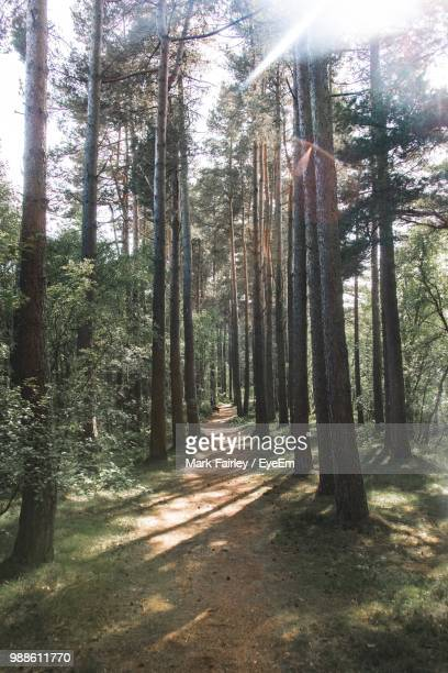 trees in forest - aberdeenshire stock pictures, royalty-free photos & images