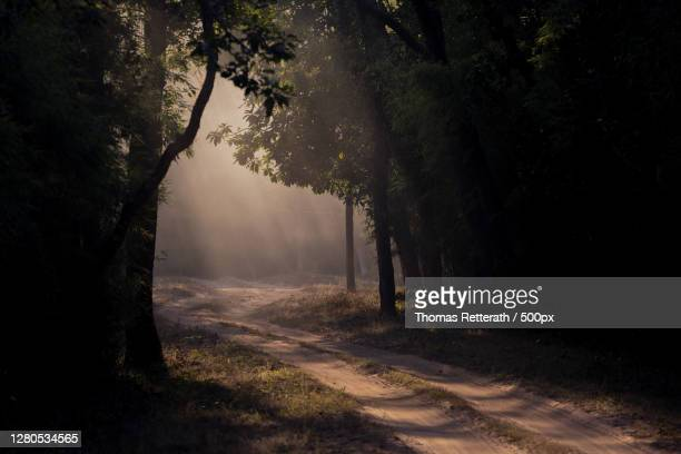 trees in forest, tala, madhya pradesh, india - baum stock pictures, royalty-free photos & images
