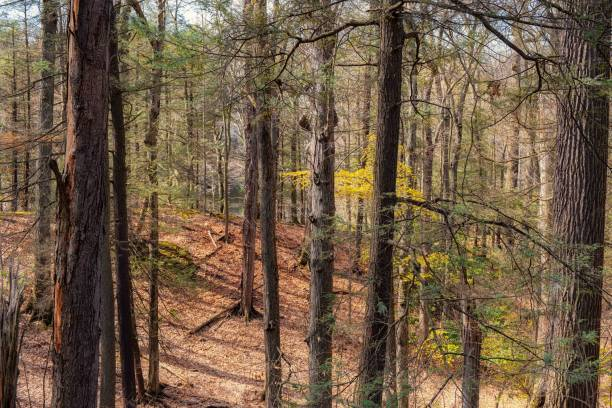 Trees in forest,Durand Eastman Park,United States,USA