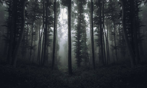 Trees in forest,Foresta Nera,Germany