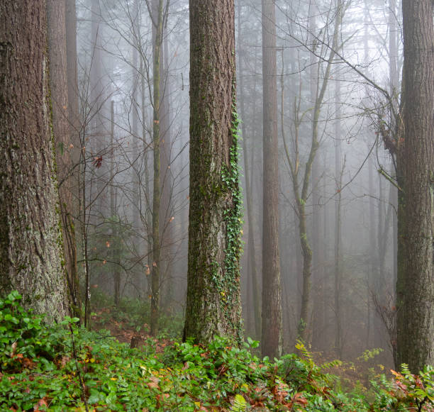 Trees in forest,Hoyt Arboretum,United States,USA