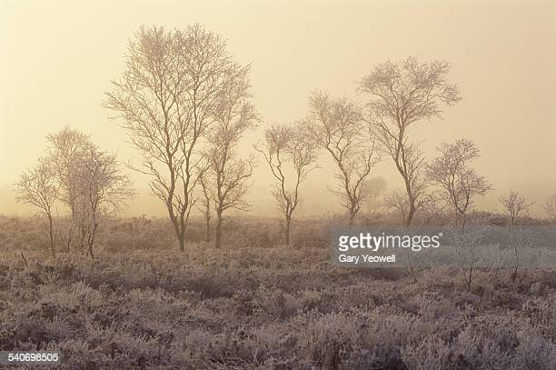 trees in freezing fog - yeowell foto e immagini stock
