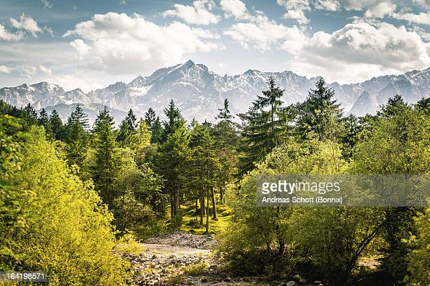trees in front of mountains - karwendel mountains stock pictures, royalty-free photos & images