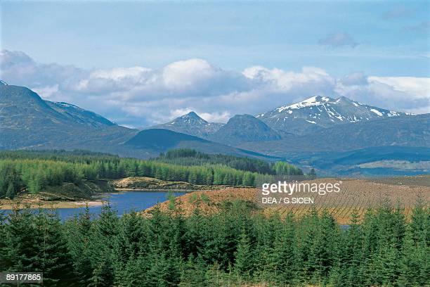 Trees in front of summits, Ben Nevis, Highlands Region, Scotland