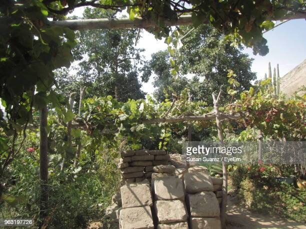 trees in garden - suarez stock pictures, royalty-free photos & images