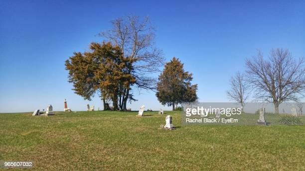 trees in graveyard against blue sky - cemetery stock photos and pictures