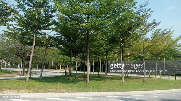 trees in green area by road - curb stock pictures, royalty-free photos & images