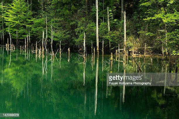 Trees in green water pond