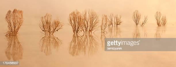 Bäume in lake und morgen Nebel