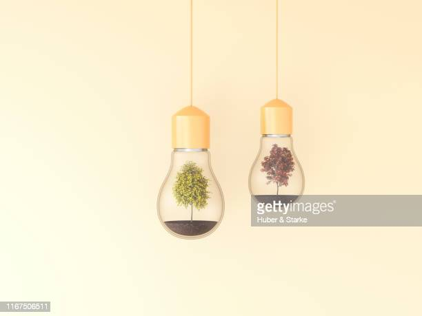 trees in light bulbs, upcycling