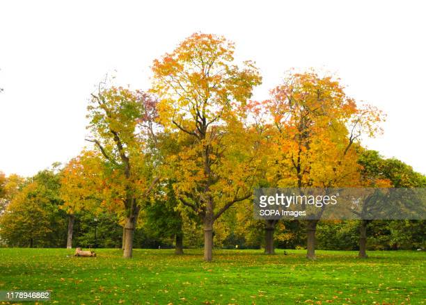 Trees in London's Hyde Park give some real Autumn colours to the capital's most famous open space.