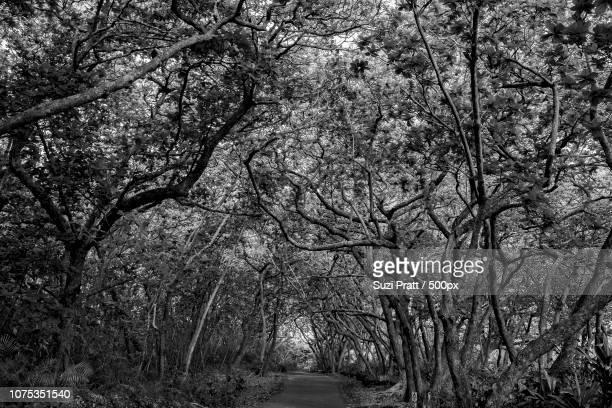 Trees in Maui Hawaii