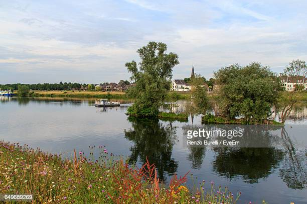 trees in meuse river against sky - meuse river stock photos and pictures
