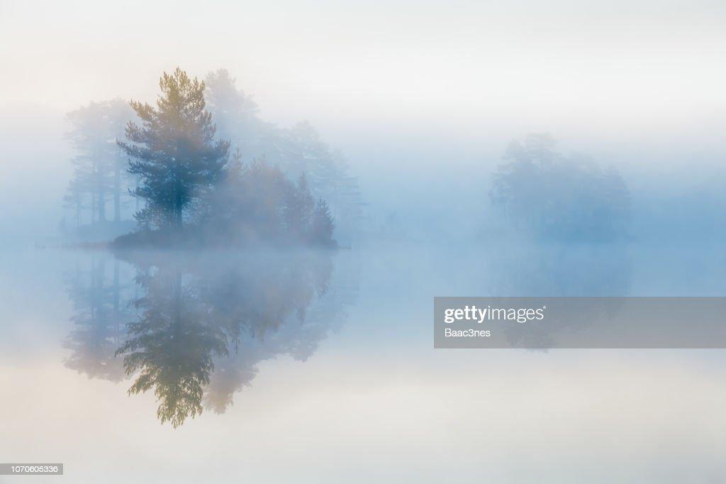 Trees in mist : Stock Photo