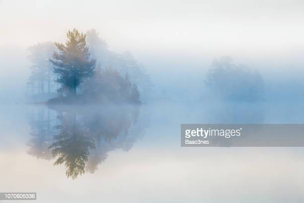 trees in mist - kalmte stockfoto's en -beelden