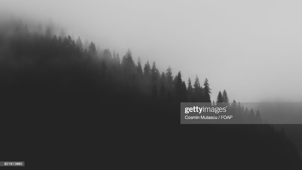 Trees in mountain during foggy weather : Stock Photo