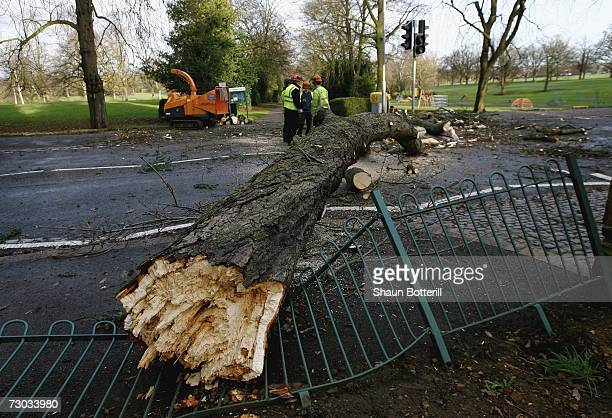 Trees in Northampton's Abington Park are uprooted by high winds on January 18 2007 in Northampton England Gale force winds and heavy rain has brought...