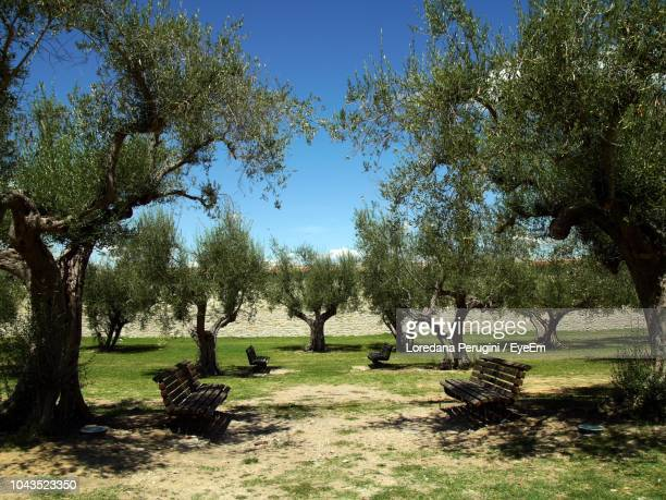 trees in park against blue sky - loredana perugini stock pictures, royalty-free photos & images