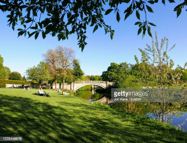 trees in park against blue sky - grass stock pictures, royalty-free photos & images