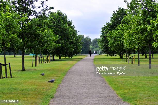 trees in park against sky - public park stock pictures, royalty-free photos & images