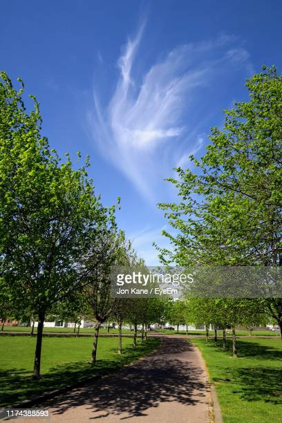 trees in park against sky - glasgow green stock pictures, royalty-free photos & images