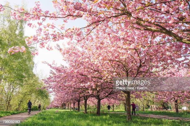 trees in park against sky - apple blossom tree stock pictures, royalty-free photos & images