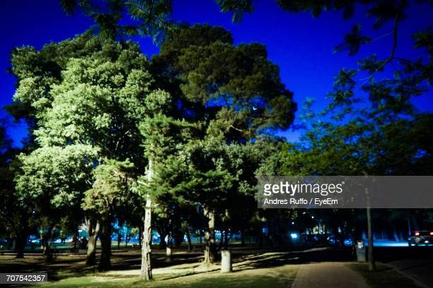 Trees In Park At Night