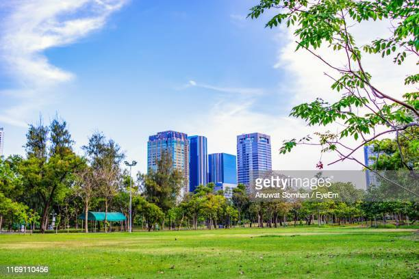 trees in park by buildings against blue sky - anuwat somhan stock photos and pictures