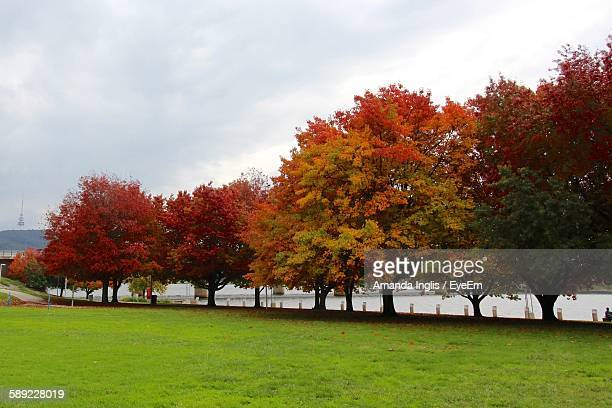 Trees In Park By River Against Cloudy Sky