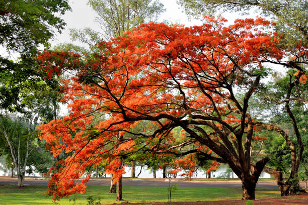 Trees In Park During Autumn, Londrina, Brazil