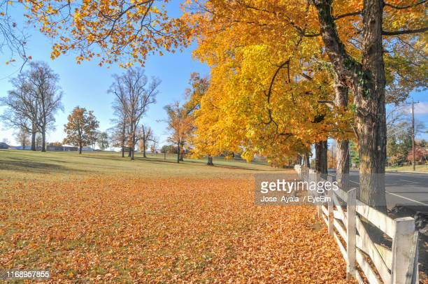trees in park during autumn - jose ayala stock pictures, royalty-free photos & images