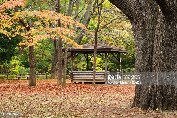 trees in park during autumn - sapporo stock pictures, royalty-free photos & images