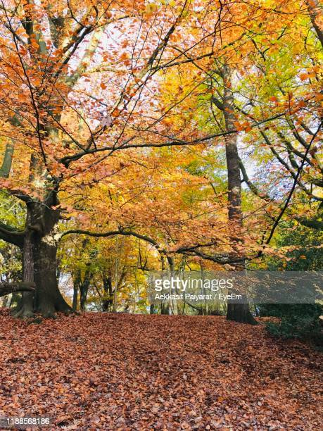 trees in park during autumn - highgate stock pictures, royalty-free photos & images
