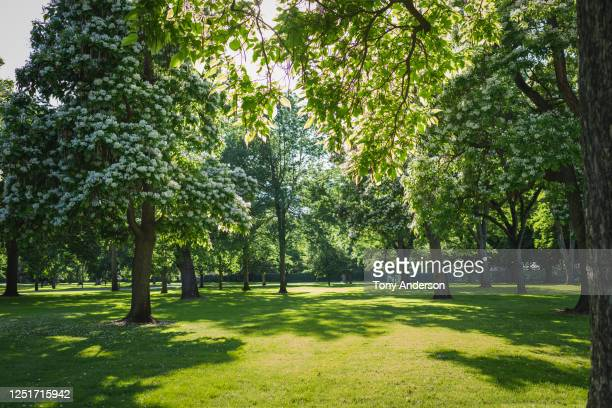 trees in park in springtime - public park stock pictures, royalty-free photos & images