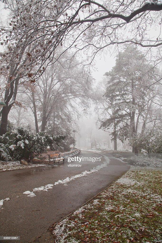 Árvores no Parque no Inverno tempo : Foto de stock