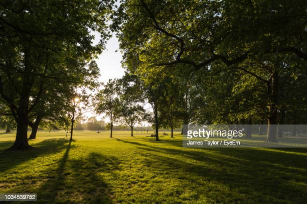 trees in park - hyde park london stock photos and pictures
