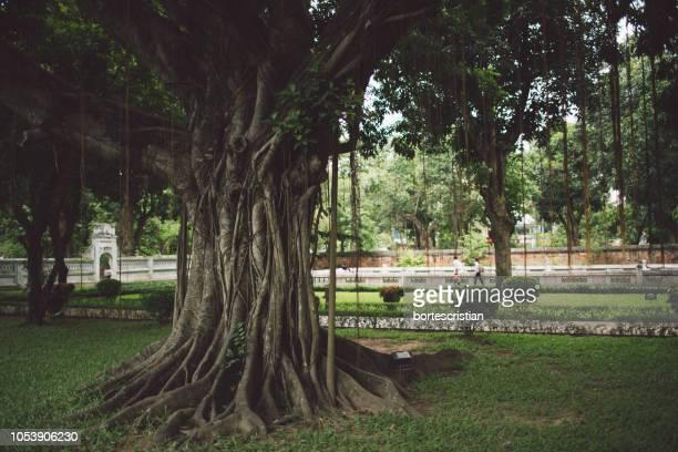 trees in park - bortes stock-fotos und bilder