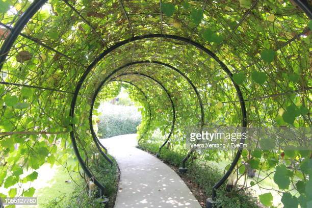 trees in park - prachuap khiri khan province stock pictures, royalty-free photos & images
