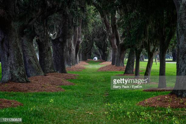 trees in park - barry wood stock pictures, royalty-free photos & images