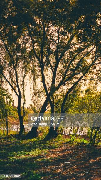 trees in park - kunming stock pictures, royalty-free photos & images