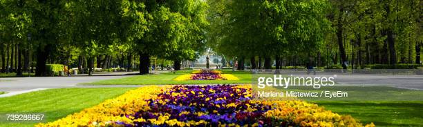 trees in park - mazowieckie stock pictures, royalty-free photos & images